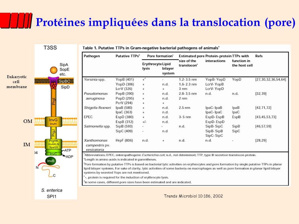 Les chaperonnes Interaction avec les protéines effectrices sécrétées par les T3SS dans le cytoplasme de la bactérie et avec les protéines du translocon Rôles : Facilitent la sécrétion de leur substrat (effecteur, composant T3SS, régulateurs) en les stabilisant maintien dans une conformation compétente pour la sécrétion empêcher leur association prématurée dans le cytoplasme (SipBC/SicA) Notion de hiérarchie de sécrétion des effecteurs 3 classes de chaperonnes : classe Ia : lie un seul effecteur ou composant du T3SS (SicP par ex.) classe Ib : peuvent se lier à plusieurs effecteurs (InvB par ex.) classe II : liaison aux protéines du translocon (SycD, SicA) Similarité de séquence faible Caractéristiques conservées : masse moléculaire (~15 kDa), pI~5, 1 feuillet b et 3 hélices a, gènes généralement localisés à proximité d'un gène codant un effecteur