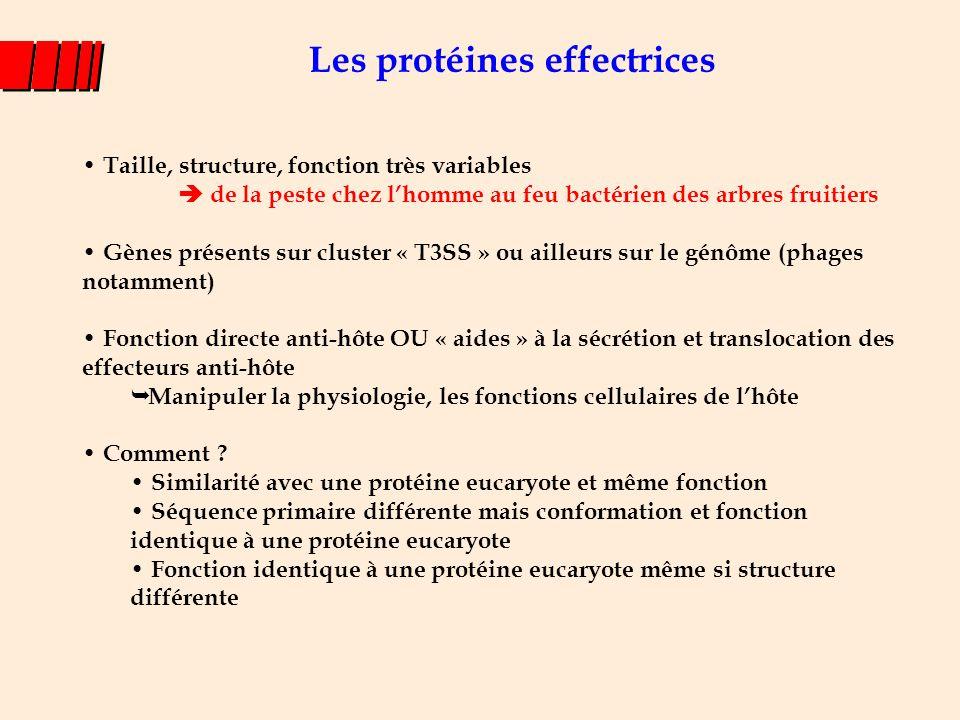 Les protéines effectrices Taille, structure, fonction très variables  de la peste chez l'homme au feu bactérien des arbres fruitiers Gènes présents s