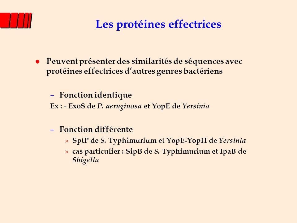 - empêcher la phagocytose ( Yersinia spp.) - effet cytotoxique ( Yersinia ) - Lyser la vacuole d'endocytose ( Shigella, Ipa) - apoptose du macrophage ( Shigella, Salmonella ) - favoriser l'entrée dans les cellules ( Shigella, Salmonella par ex.) - permettre la survie et multiplication intracellulaire ( Salmonella par ex.) - attachement/effacement E.