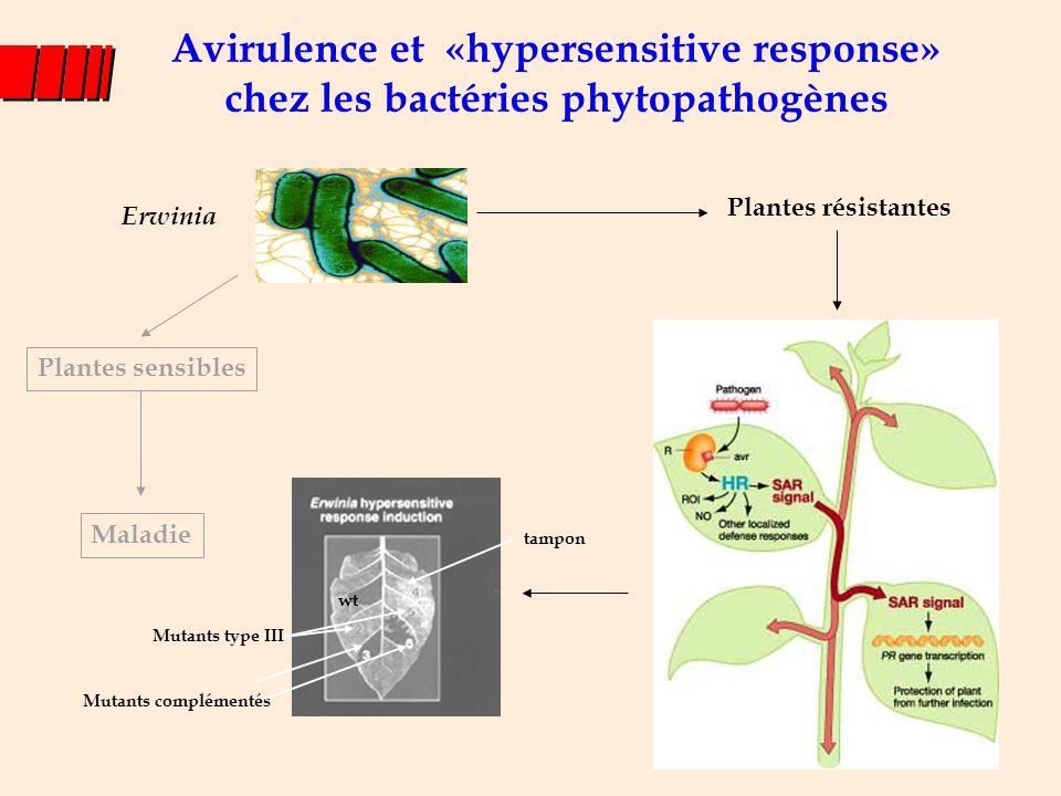 Suppression de l'activation transcriptionnelle des microRNAs Navarro et al., Science, 2008