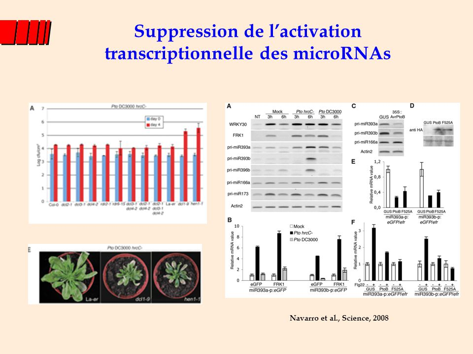 Suppression de l'activation transcriptionnelle des microRNAs Navarro et al., Science, 2008
