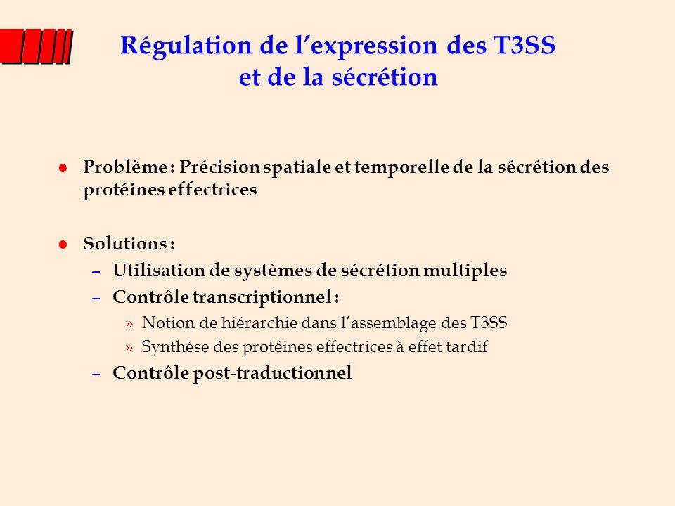 Appareilde sécrétion Effecteurs TTSS-1 Chaperons Modèle simplifié de régulation de SPI-1 Régulateurs InvF HilA + + Transcription d'abord des gènes de structure puis des gènes codant les effecteurs