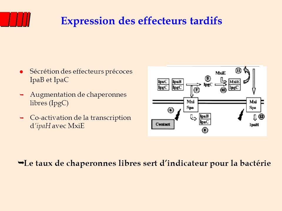 l Sécrétion des effecteurs précoces IpaB et IpaC  Augmentation de chaperonnes libres (IpgC)  Co-activation de la transcription d 'ipaH avec MxiE Exp