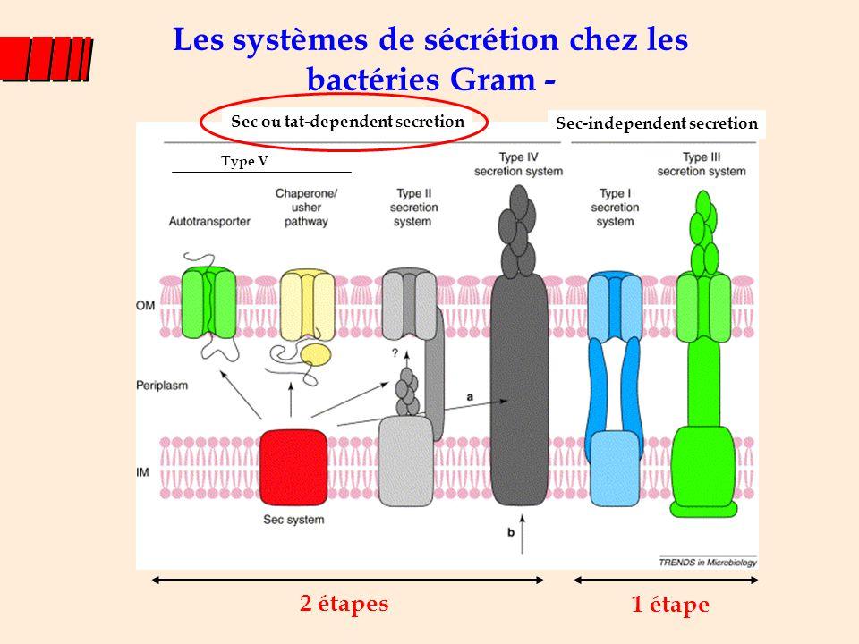 Franchissement de la membrane interne : exportation Colin Robinson & Albert Bolhuis, Nature Reviews Molecular Cell Biology, 2001 Processing to mature size AND Folding Peptide signal : en N-term de la protéine, motif twin- arginin pour le système Tat, clivé