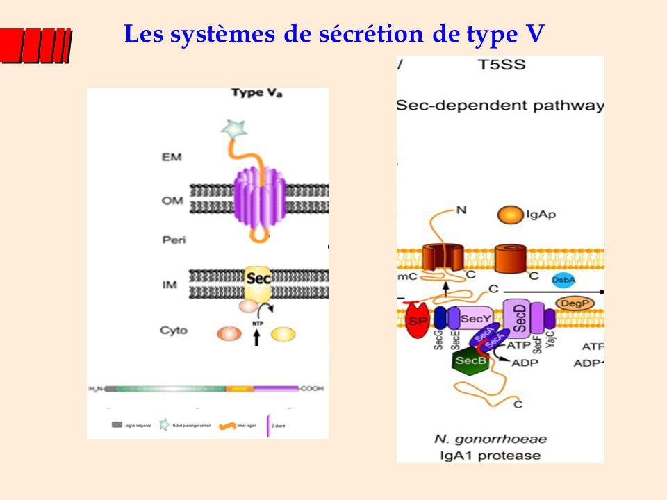 Système de sécrétion de type II 12-16 protéines : membrane interne et externe Modèle du piston Exemple : pullulanase de K.