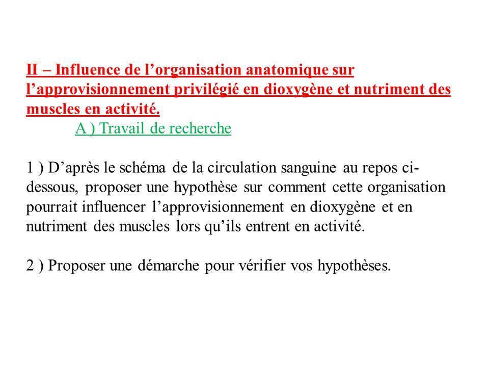 II – Influence de l'organisation anatomique sur l'approvisionnement privilégié en dioxygène et nutriment des muscles en activité. A ) Travail de reche
