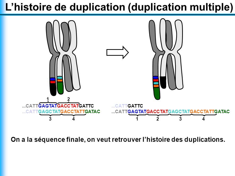 L'histoire de duplication (duplication multiple)...CATTGAGTATGACCTATGATTC...CATTGAGCTATGACCTATTGATAC 34 12 1...CATTGATTC...CATTGAGTATGACCTATGAGCTATGACCTATTGATAC 342 On a la séquence finale, on veut retrouver l'histoire des duplications.