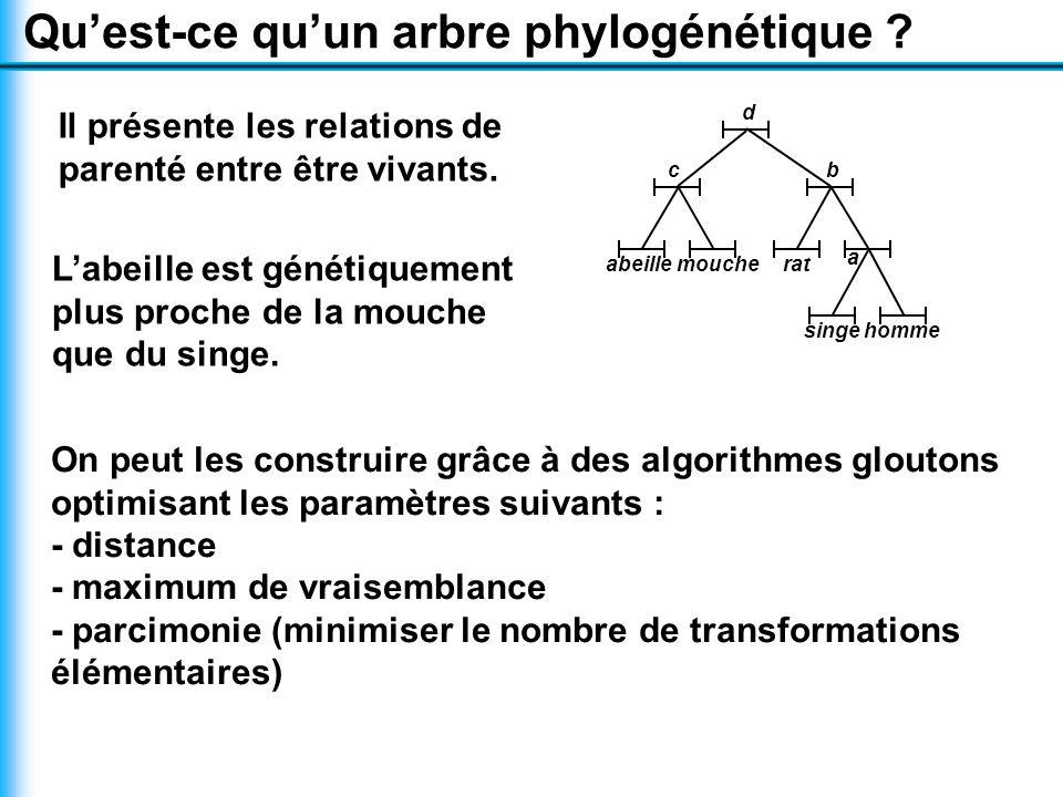Qu'est-ce qu'un arbre phylogénétique .