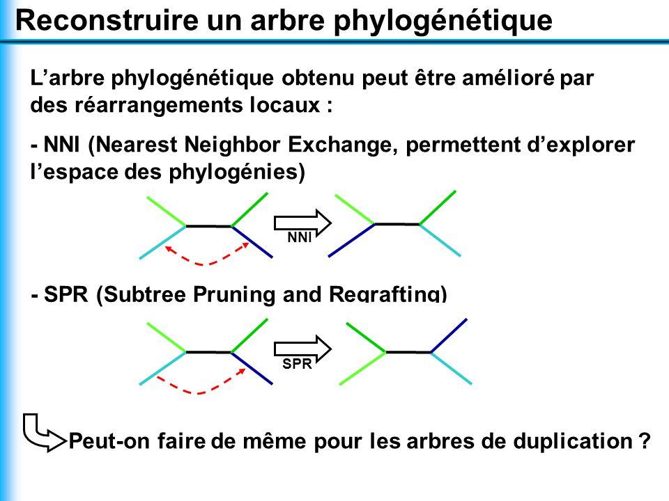 L'arbre phylogénétique obtenu peut être amélioré par des réarrangements locaux : - NNI (Nearest Neighbor Exchange, permettent d'explorer l'espace des phylogénies) Reconstruire un arbre phylogénétique NNI - SPR (Subtree Pruning and Regrafting) SPR Peut-on faire de même pour les arbres de duplication