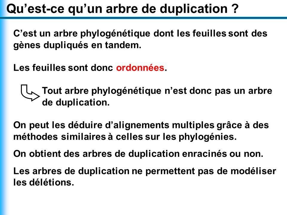 Qu'est-ce qu'un arbre de duplication .