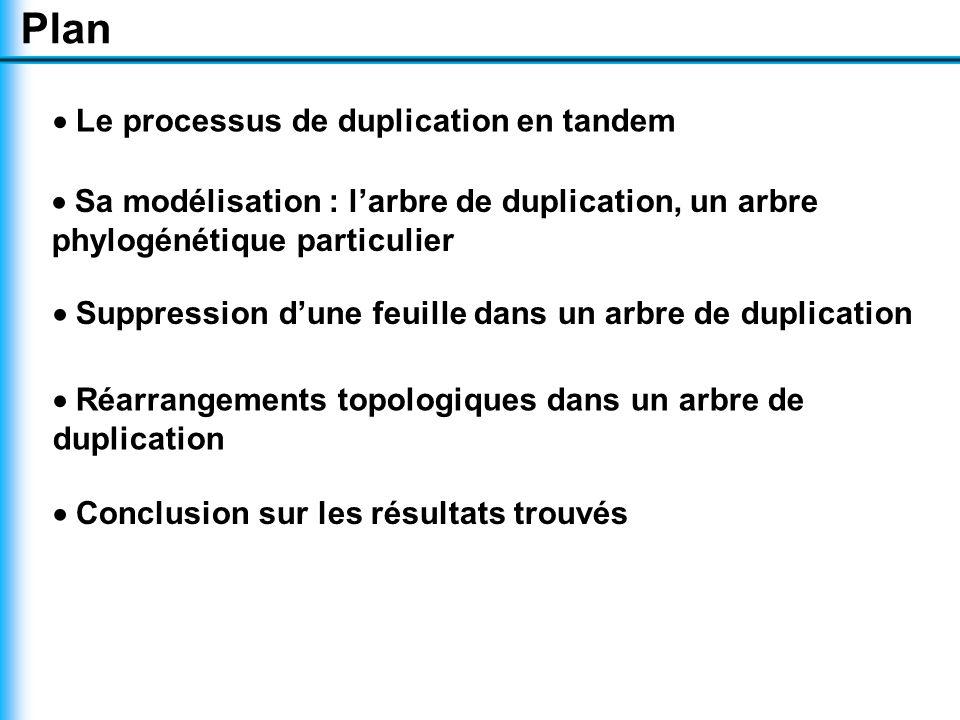 Plan  Le processus de duplication en tandem  Sa modélisation : l'arbre de duplication, un arbre phylogénétique particulier  Suppression d'une feuille dans un arbre de duplication  Réarrangements topologiques dans un arbre de duplication  Conclusion sur les résultats trouvés