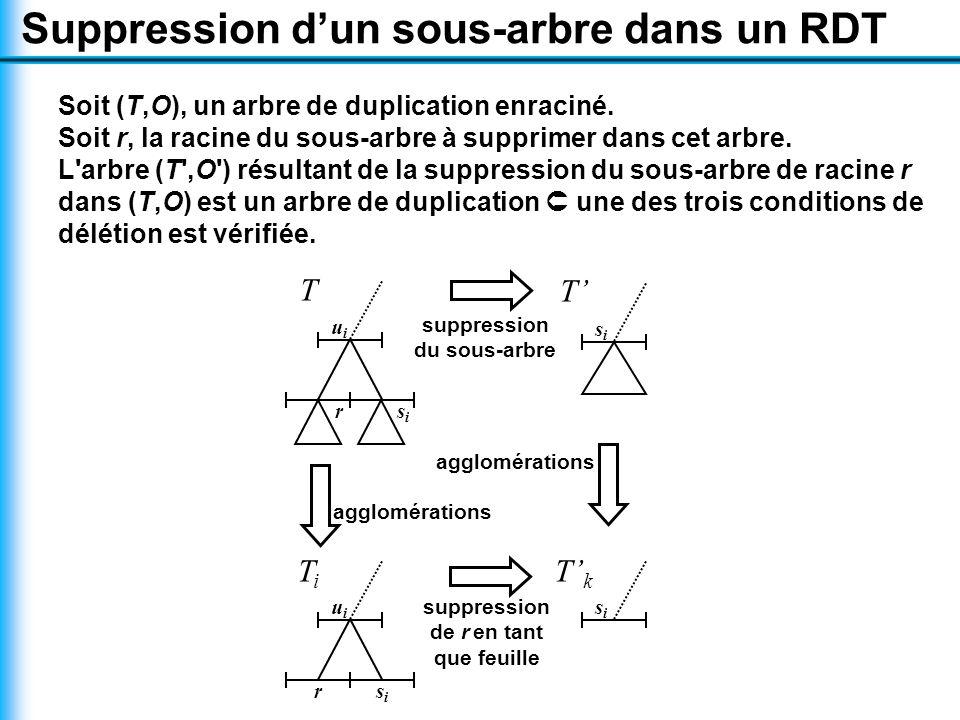 TiTi u i rsisi T' k s i suppression de r en tant que feuille suppression du sous-arbre T' s i agglomérations T u i r s i Soit (T,O), un arbre de duplication enraciné.