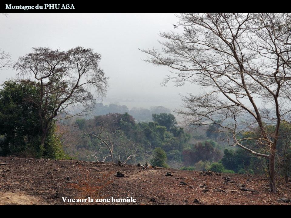 Zone protégée de Xe Pian Ban Khiet Ngong Route CHAMPASSAK – ÎLE DE KHONG