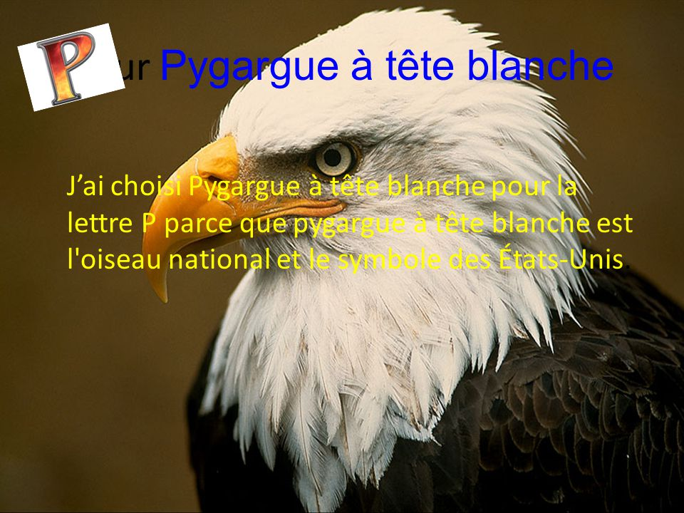 pour Pygargue à tête blanche J'ai choisi Pygargue à tête blanche pour la lettre P parce que pygargue à tête blanche est l'oiseau national et le symbol