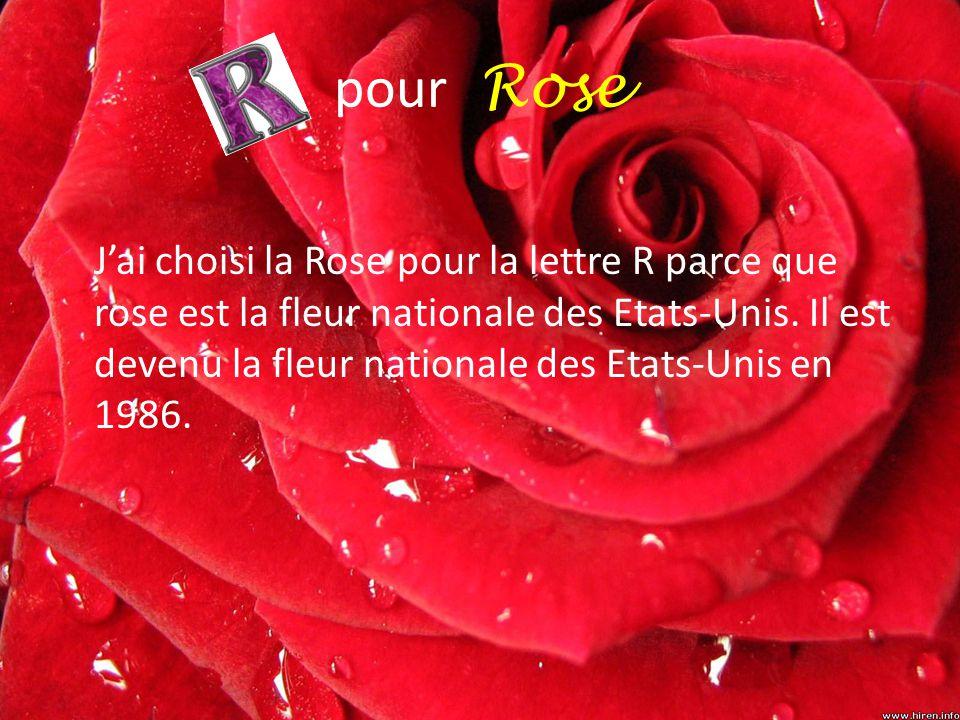 pour Rose J'ai choisi la Rose pour la lettre R parce que rose est la fleur nationale des Etats-Unis. Il est devenu la fleur nationale des Etats-Unis e