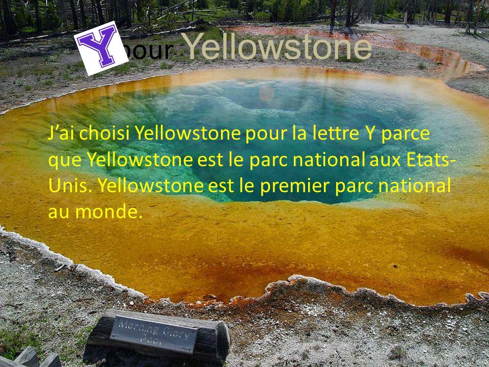 pour Yellowstone J'ai choisi Yellowstone pour la lettre Y parce que Yellowstone est le parc national aux Etats- Unis. Yellowstone est le premier parc
