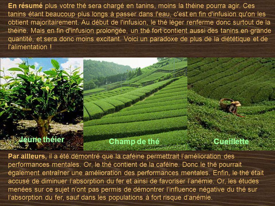 En résumé plus votre thé sera chargé en tanins, moins la théine pourra agir.