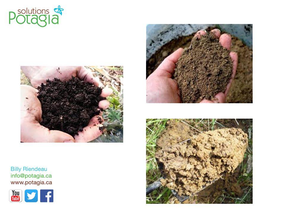 Entretien de cueillette À chaque cueillette de légumes, il est important d'inspecter les plantes, le sol et l'environnement.