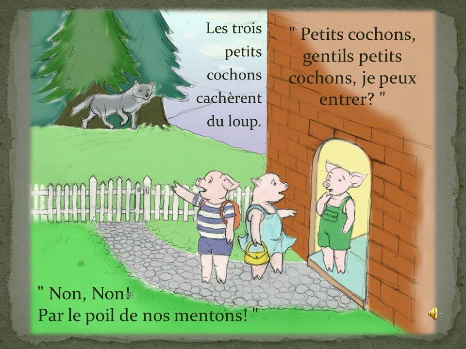 Le troisième petit cochon, lui avait rencontré un homme chargé de briques. L'homme lui donna assez de briques pour bâtir une maison grande et solide.