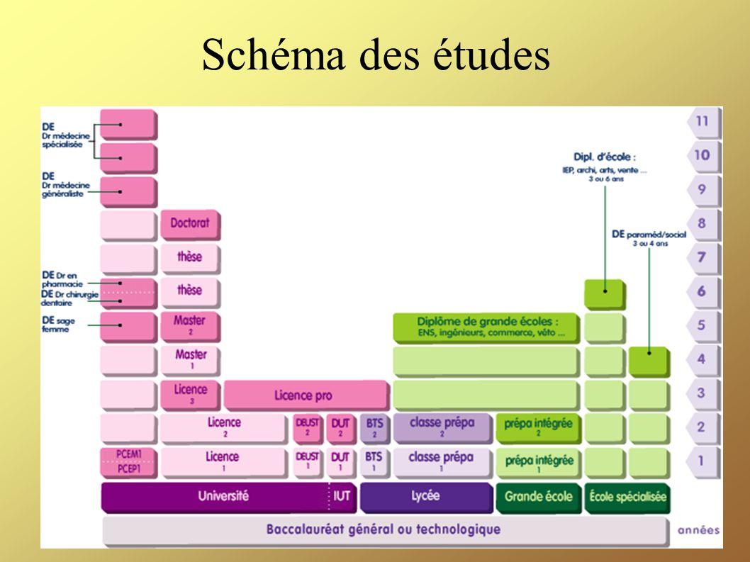 Schéma des études