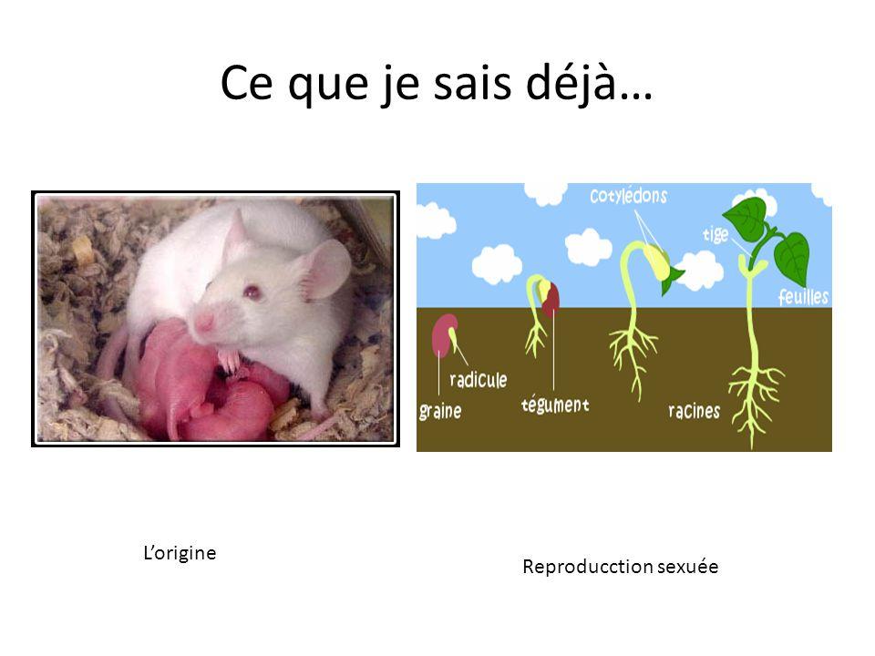 La Reproduction sexuée Doc.1 ( Utiliser la classification générale des animaux).