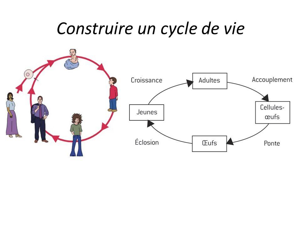 Construire un cycle de vie