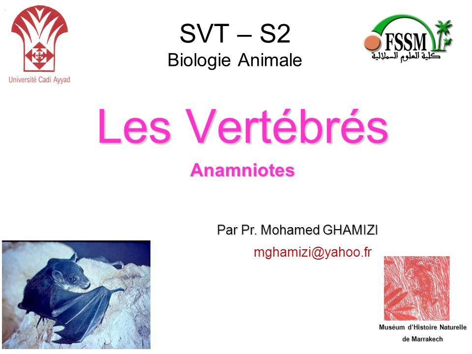 SVT – S2 Biologie Animale Les Vertébrés Anamniotes Par Pr. Mohamed GHAMIZI Muséum d'Histoire Naturelle de Marrakech mghamizi@yahoo.fr