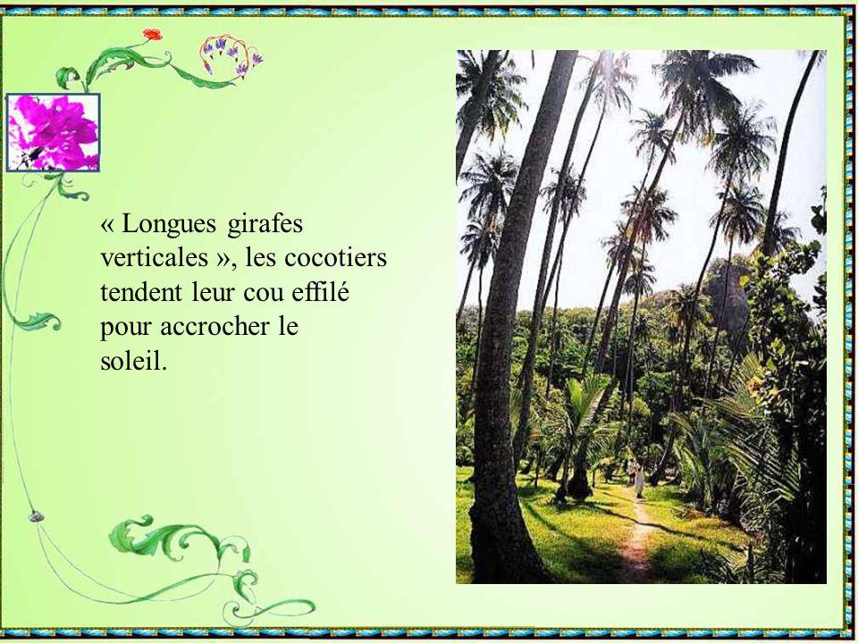 Les Martiniquais sont très fiers de la Bibliothèque Schoelcher, aussi emblématique pour Fort de France que la Tour Eiffel l 'est pour Paris. Toutes de