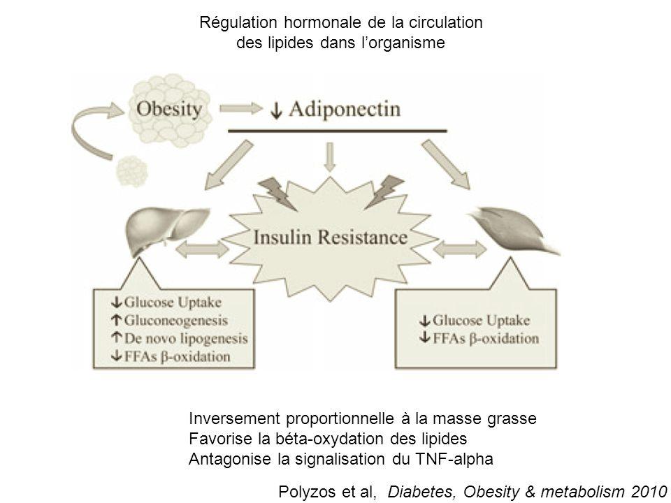Absorption intestinale de lipides et de carbohydrates Pool d'acides gras libres Lipogénèse hépatique 59% 15% Source des acides gras intra-hépatiques D'après Neuschwander-Tetri Hepatology 2010 Adipocytes SREBP1