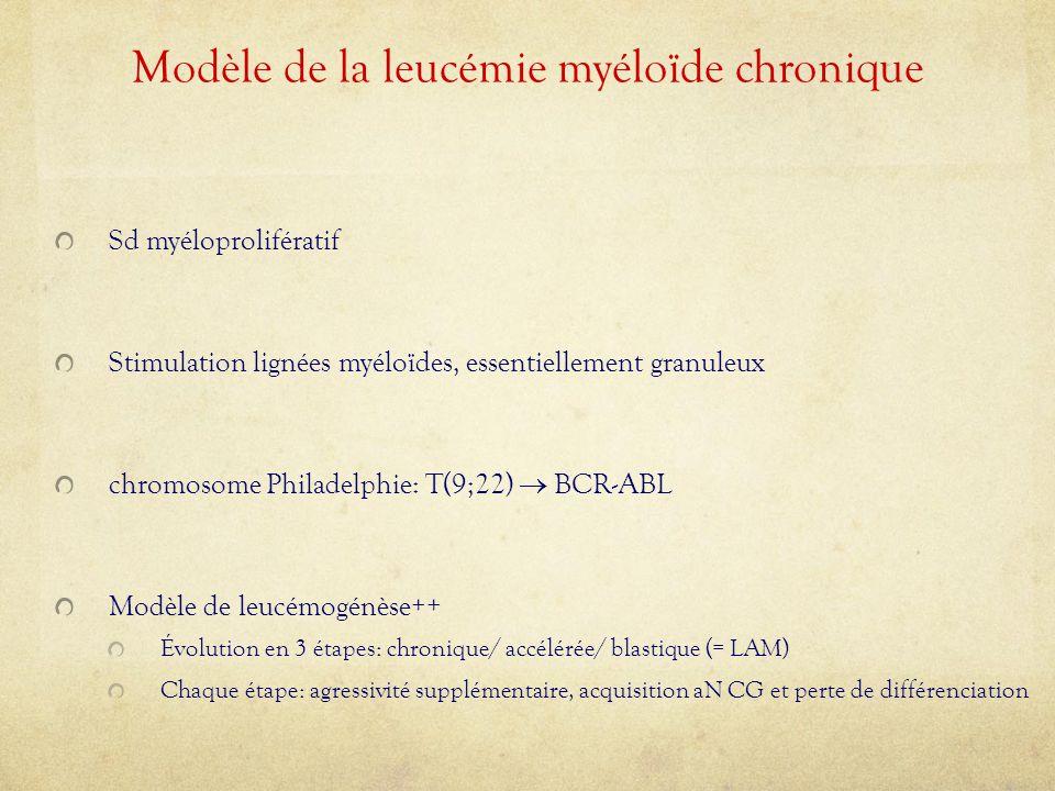 Modèle de la leucémie myéloïde chronique Sd myéloprolifératif Stimulation lignées myéloïdes, essentiellement granuleux chromosome Philadelphie: T(9;22