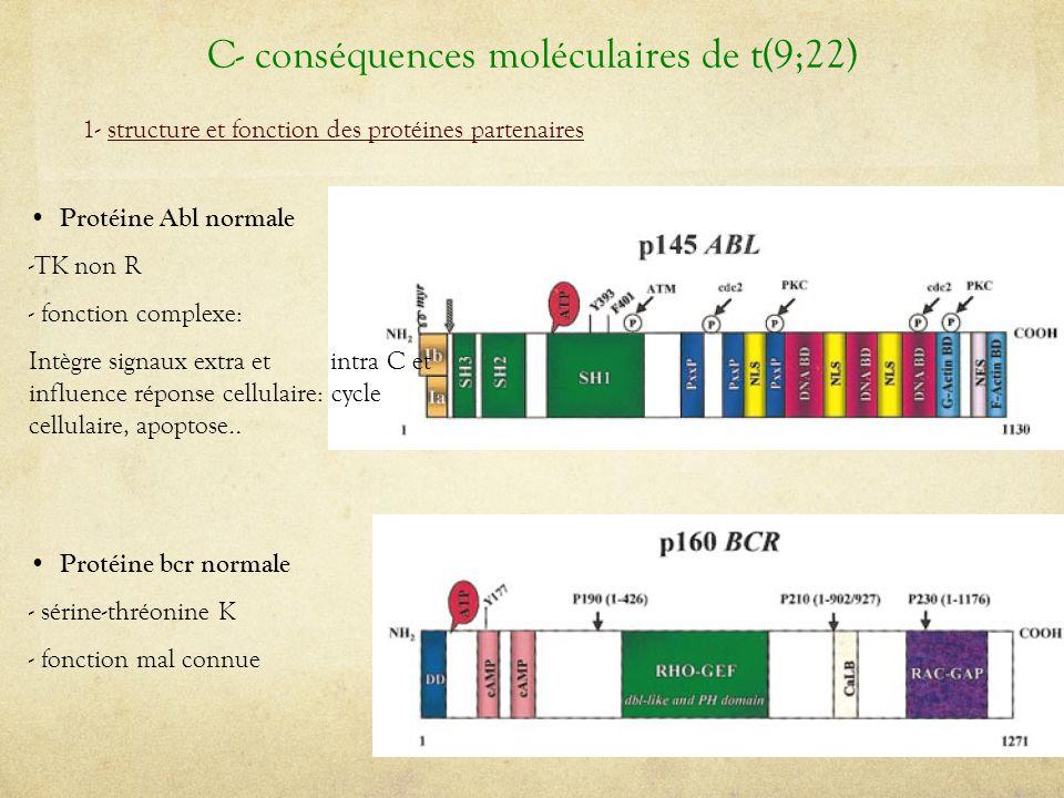 Protéine Abl normale -TK non R - fonction complexe: Intègre signaux extra et intra C et influence réponse cellulaire: cycle cellulaire, apoptose.. Pro