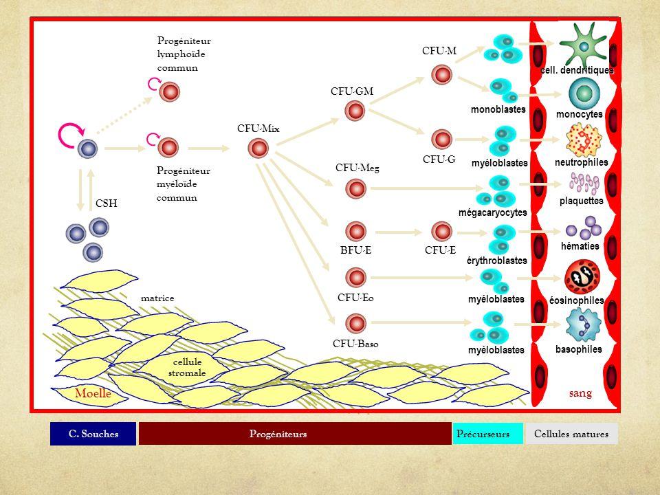 Progéniteurs CFU-Mix CFU-G CFU-M CFU-GM CFU-Meg CFU-EBFU-E CFU-Baso CFU-Eo matrice sang Moelle cellule stromale Cellules matures monocytes neutrophile