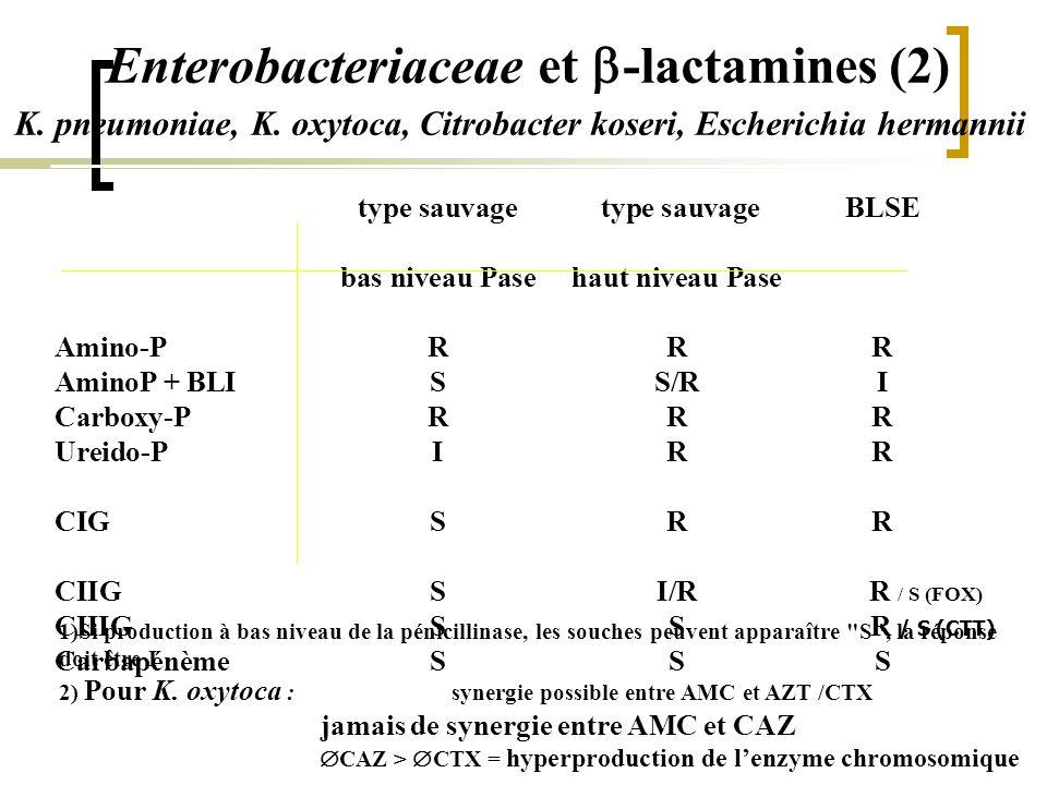 Enterobacteriaceae et  -lactamines (2) type sauvage type sauvageBLSE bas niveau Pasehaut niveau Pase Amino-PRRR AminoP + BLISS/RI Carboxy-PRRR Ureido