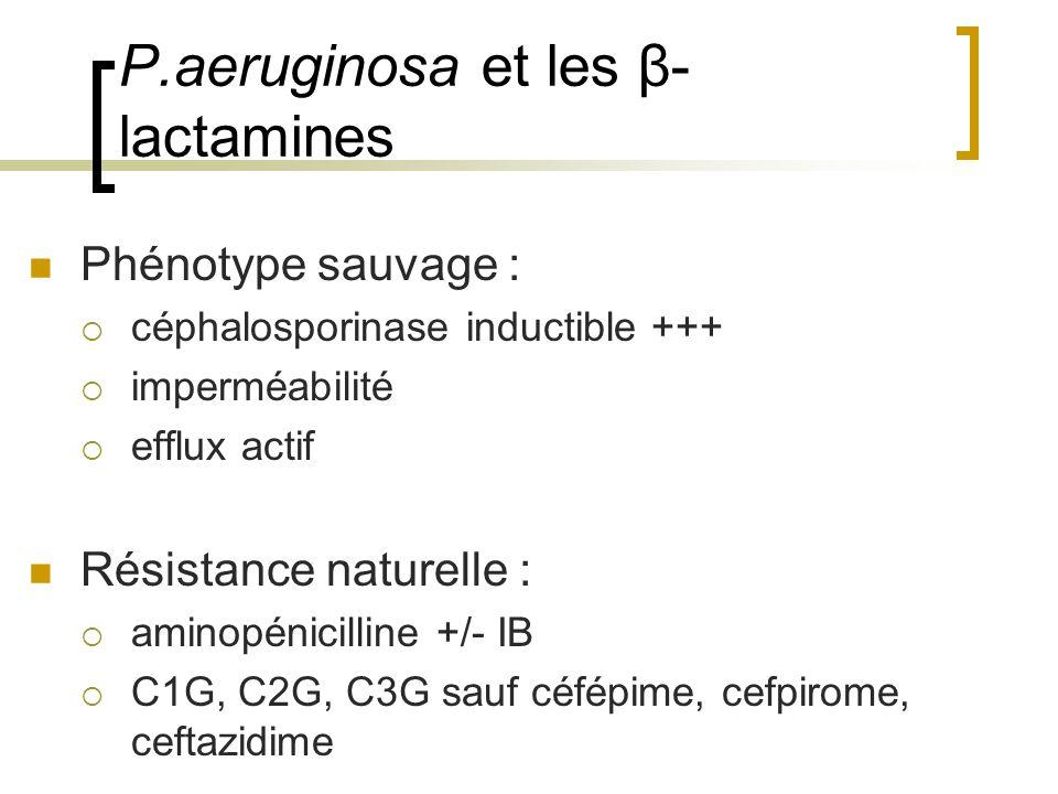 P.aeruginosa et les β- lactamines Phénotype sauvage :  céphalosporinase inductible +++  imperméabilité  efflux actif Résistance naturelle :  amino
