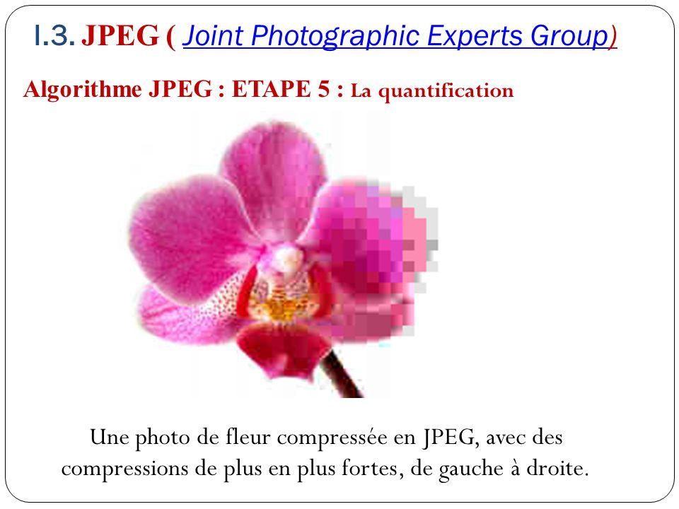 Algorithme JPEG : ETAPE 5 : La quantification Une photo de fleur compressée en JPEG, avec des compressions de plus en plus fortes, de gauche à droite.