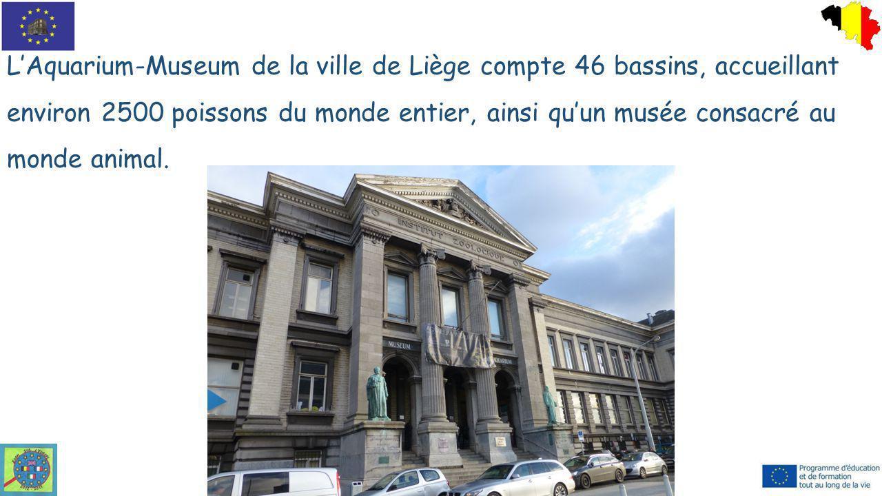 L'Aquarium-Museum de la ville de Liège compte 46 bassins, accueillant environ 2500 poissons du monde entier, ainsi qu'un musée consacré au monde anima