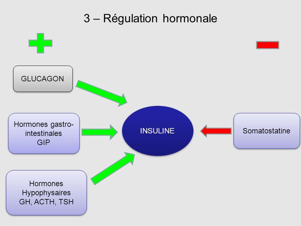 3 – Régulation hormonale INSULINE GLUCAGON Hormones gastro- intestinales GIP Hormones gastro- intestinales GIP Hormones Hypophysaires GH, ACTH, TSH Ho
