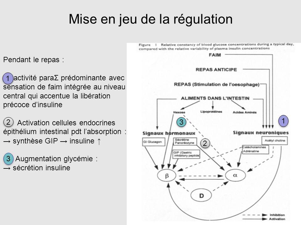 Mise en jeu de la régulation Pendant le repas : activité paraΣ prédominante avec sensation de faim intégrée au niveau central qui accentue la libérati