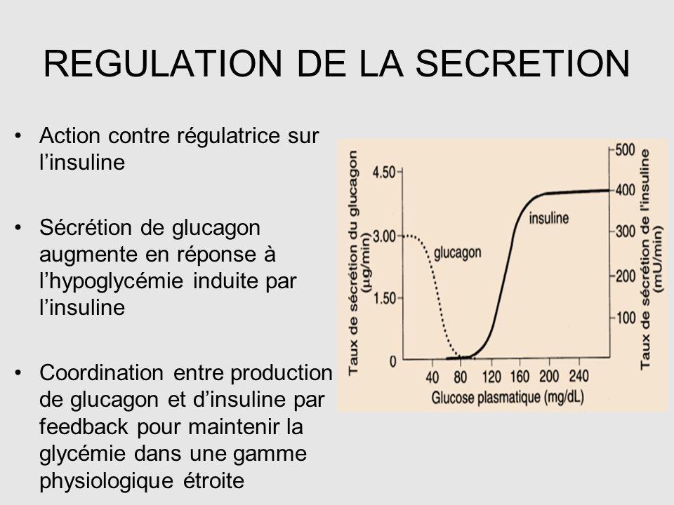 REGULATION DE LA SECRETION Action contre régulatrice sur l'insuline Sécrétion de glucagon augmente en réponse à l'hypoglycémie induite par l'insuline