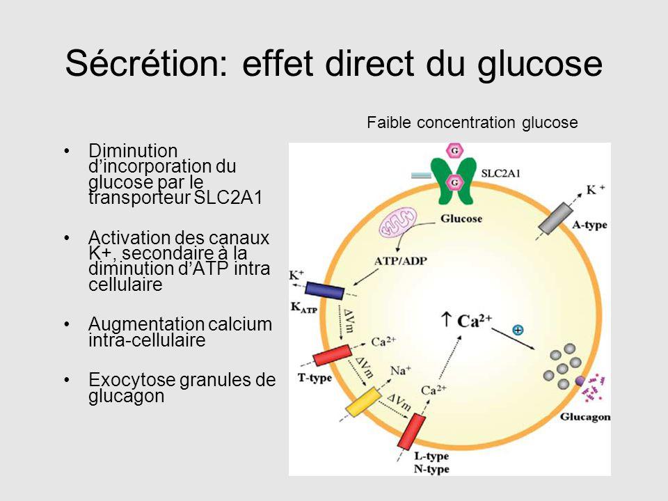 Sécrétion: effet direct du glucose Diminution d'incorporation du glucose par le transporteur SLC2A1 Activation des canaux K+, secondaire à la diminuti
