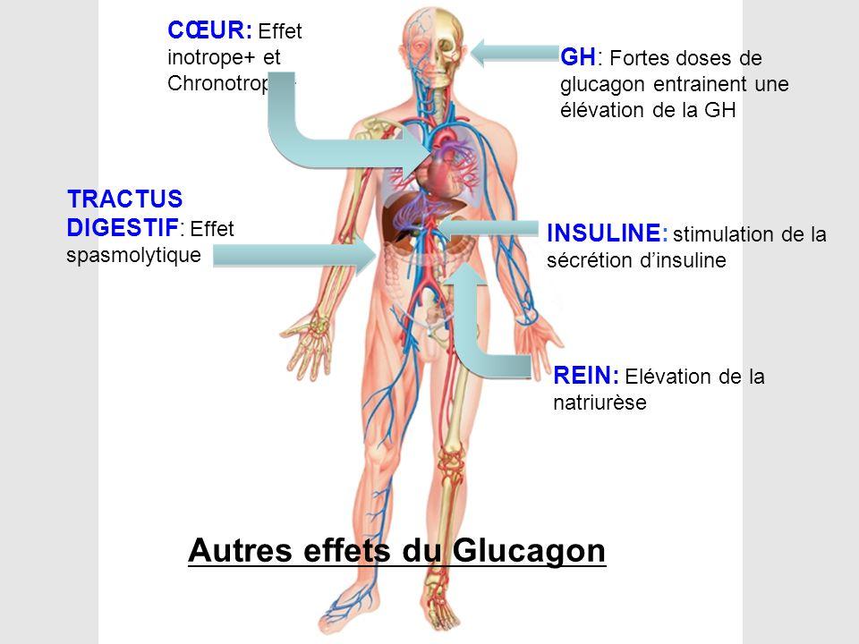 GH: Fortes doses de glucagon entrainent une élévation de la GH INSULINE: stimulation de la sécrétion d'insuline CŒUR: Effet inotrope+ et Chronotrope+