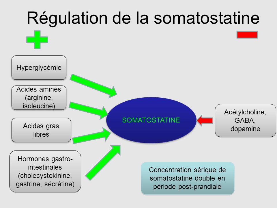 SOMATOSTATINE Hyperglycémie Hormones gastro- intestinales (cholecystokinine, gastrine, sécrétine) Hormones gastro- intestinales (cholecystokinine, gas