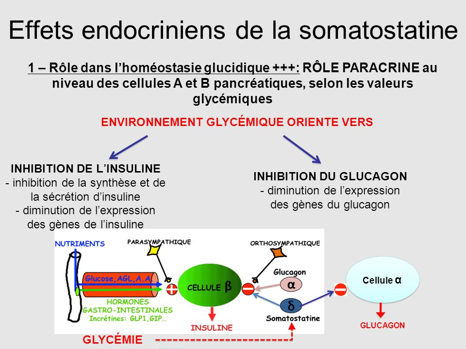 Effets endocriniens de la somatostatine 1 – Rôle dans l'homéostasie glucidique +++: RÔLE PARACRINE au niveau des cellules A et B pancréatiques, selon