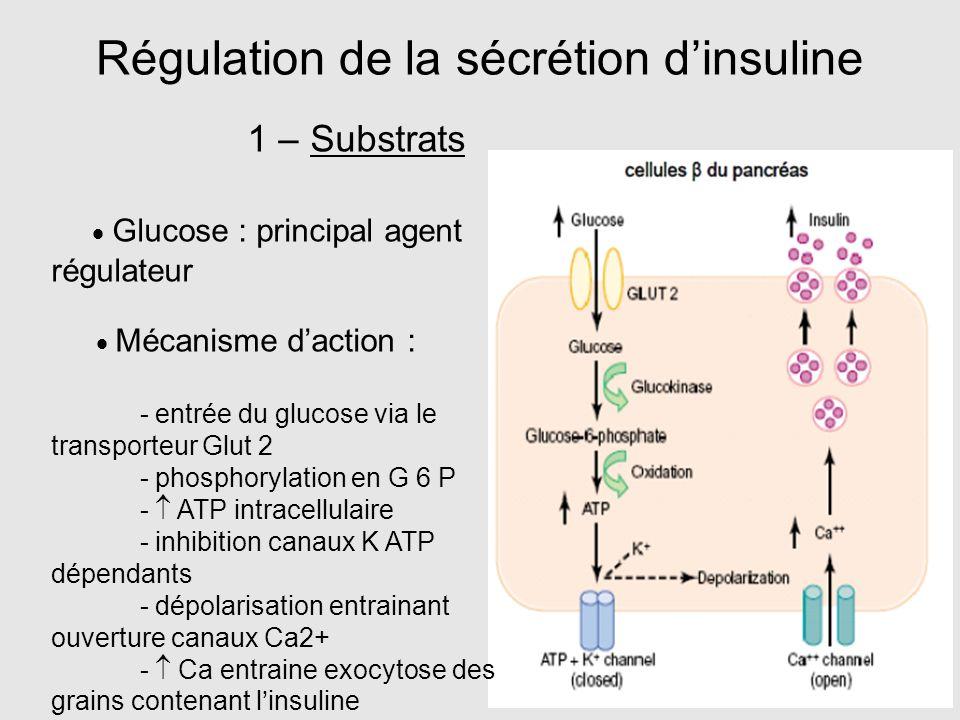 Régulation de la sécrétion d'insuline 1 – Substrats  Glucose : principal agent régulateur  Mécanisme d'action : - entrée du glucose via le transport