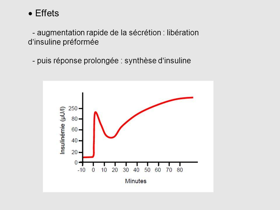  Effets - augmentation rapide de la sécrétion : libération d'insuline préformée - puis réponse prolongée : synthèse d'insuline