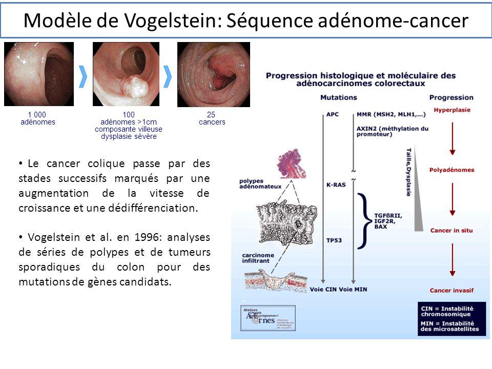 Modèle de Vogelstein: Séquence adénome-cancer Le cancer colique passe par des stades successifs marqués par une augmentation de la vitesse de croissan