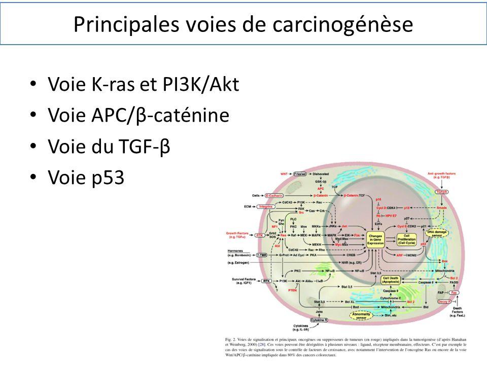 Voie K-ras et PI3K/Akt Voie APC/β-caténine Voie du TGF-β Voie p53 Principales voies de carcinogénèse