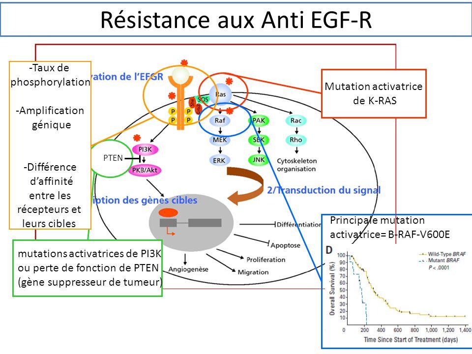Principale mutation activatrice= B-RAF-V600E mutations activatrices de PI3K ou perte de fonction de PTEN (gène suppresseur de tumeur) -Taux de phospho