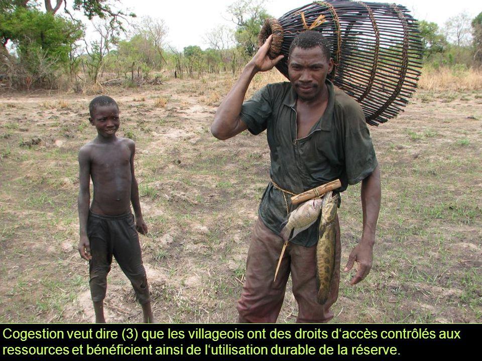 Cogestion veut dire (3) que les villageois ont des droits d'accès contrôlés aux ressources et bénéficient ainsi de l'utilisation durable de la réserve.