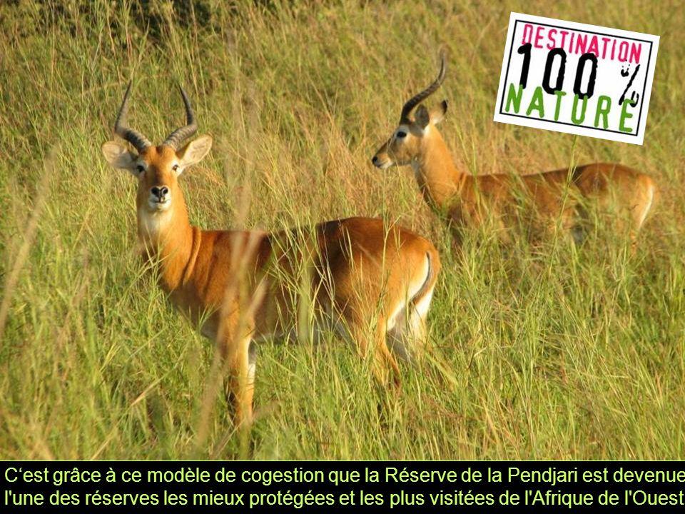 C'est grâce à ce modèle de cogestion que la Réserve de la Pendjari est devenue l une des réserves les mieux protégées et les plus visitées de l Afrique de l Ouest.